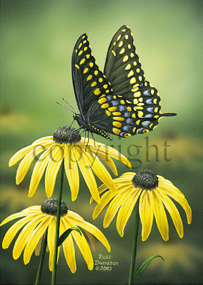 Black Swallowtail - Canvas Giclee