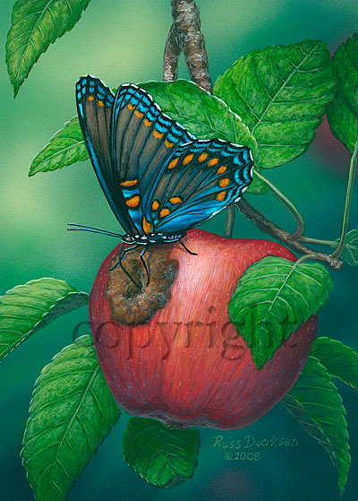 Red-spotted Purple Butterfly - Canvas Giclee