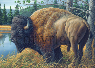 Buffalo - Giclee Canvas