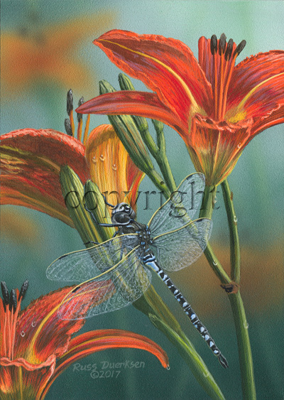 Variable Darner - Giclee Canvas