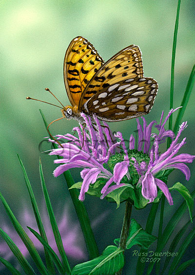Edward's Fritillary - Canvas Giclee
