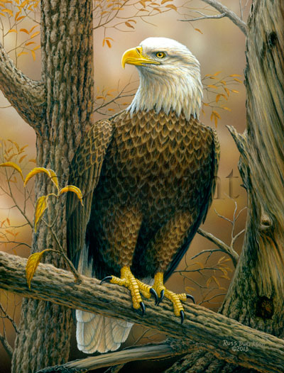"""Birds of Prey - Bald Eagle""  - Giclee Canvas"