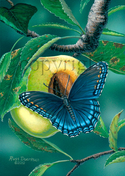 Red-spotted Purple on Yellow Apple - Canvas Giclee