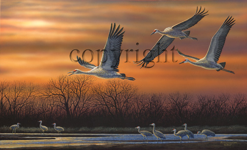 """Cranes at Sunset""  - Giclee Canvas"