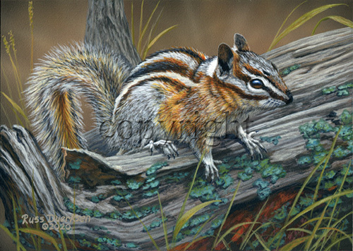 Chipmunk - Giclee Canvas