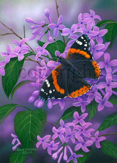 Red Admiral - Canvas Giclee