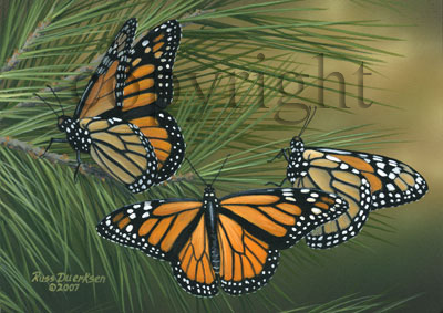 Monarchs on Pine - Canvas Giclee