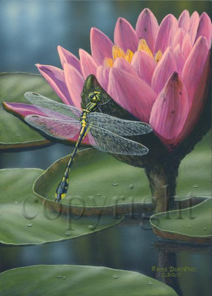 Riverine Clubtail Dragonfly - Giclee Canvas