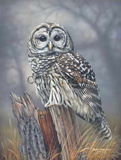 """Birds of Prey - Barred Owl""  - Giclee Canvas"