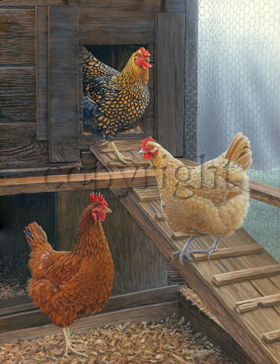 """Ladies of the Coop""  - Giclee Canvas"