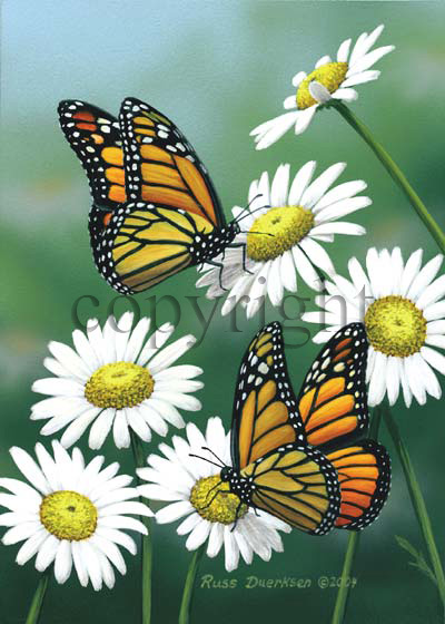 Monarchs and Daisies - Canvas Giclee