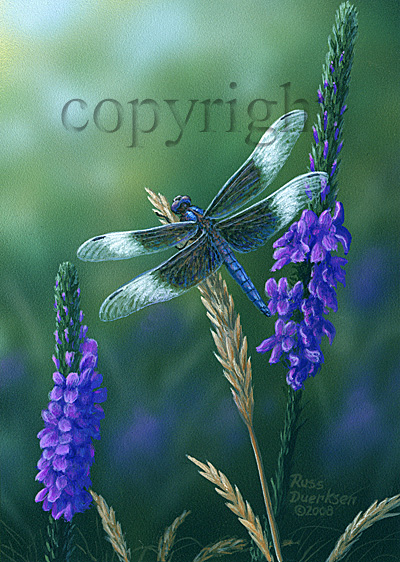 Widow Skimmer Dragonfly - Giclee Canvas