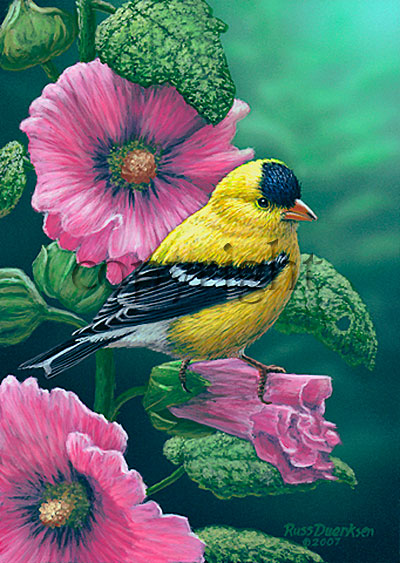 Goldfinch on Hollyhocks - Giclee Canvas