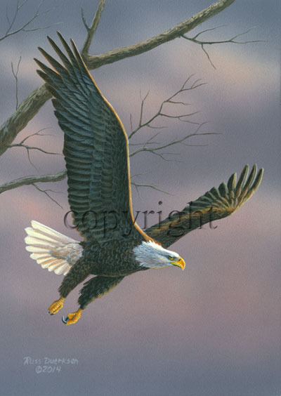 Flying Eagle - Giclee Canvas