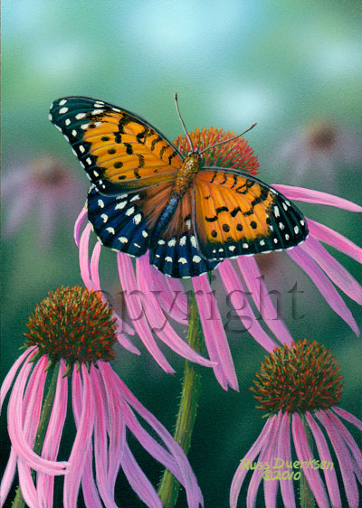 Regal Fritillary - Canvas Giclee