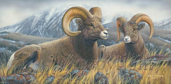 """High Country Rams""  - Giclee Canvas"