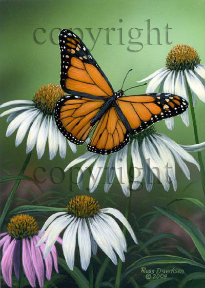 Monarch - Canvas Giclee