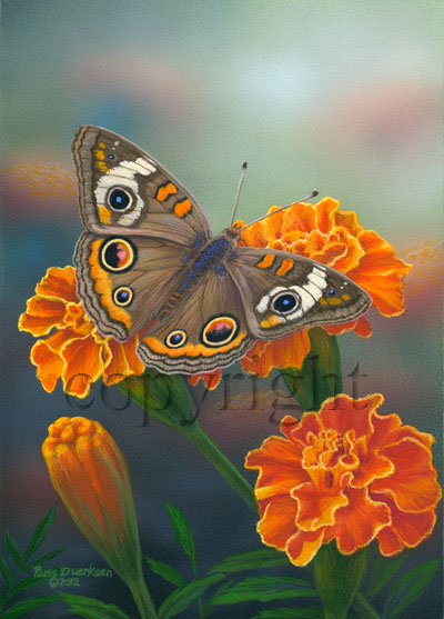 Common Buckeye - Canvas Giclee