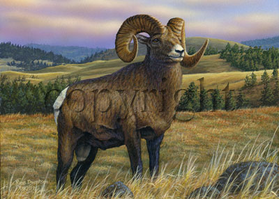 Bighorn Sheep - Giclee Canvas