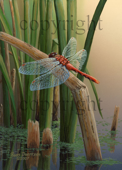 Cherry-faced Dragonfly - Giclee Canvas