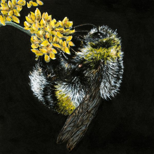 Melissa Gates Wildlife & Blossoms Paintings