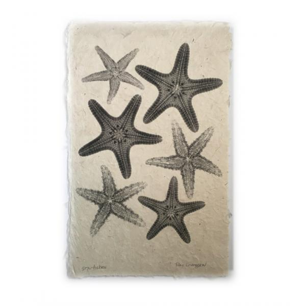 Starfishes  X-ray - Unframed Print
