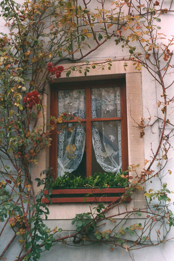 Rothenburg Window P271 - 8X10 matted 11X14