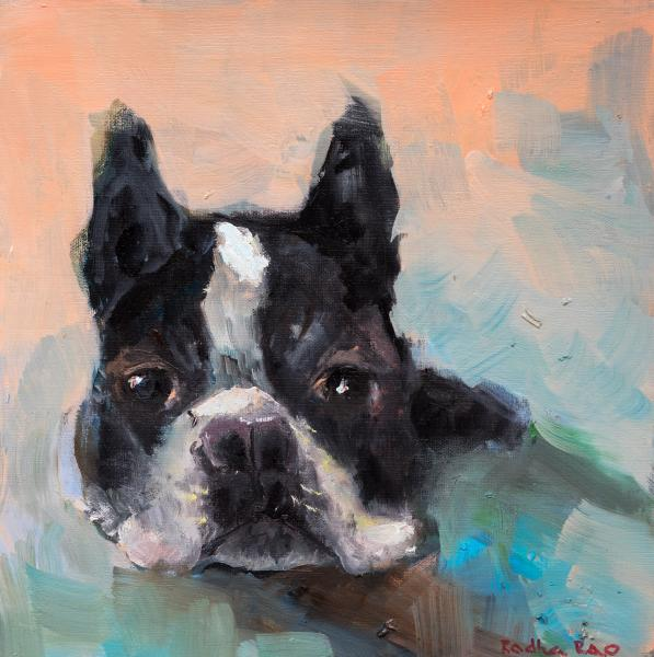 Cooper, The Boston Terrier