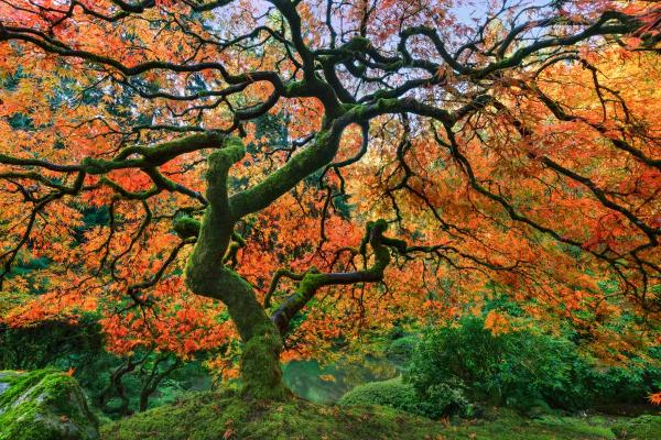 Fall Delight_Japanese Garden, Portland, Oregon