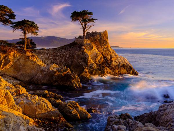 Close of Day_Lone Cypress Tree
