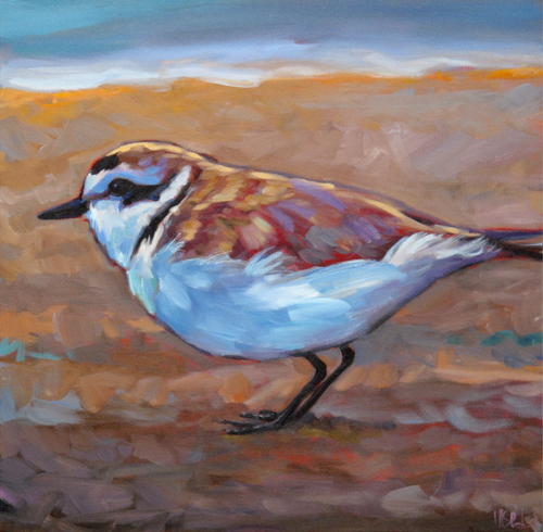 """Coastal Charmer"" (Snowy Plover)"" stretched (unframed) gicleé canvas print"