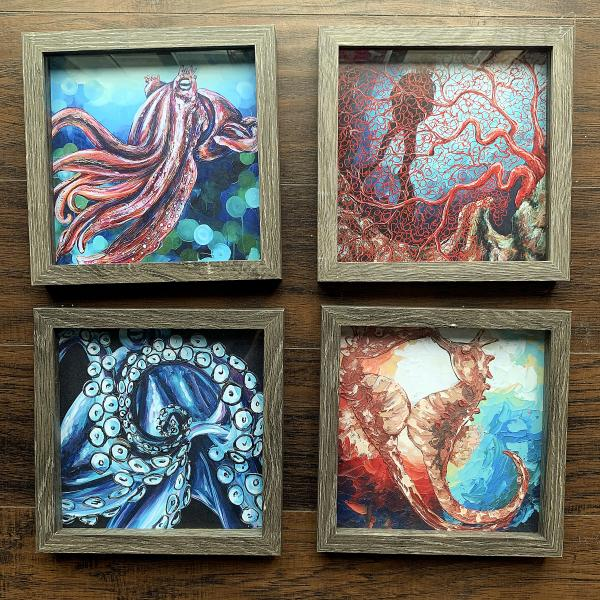 Sea Life Prints Framed