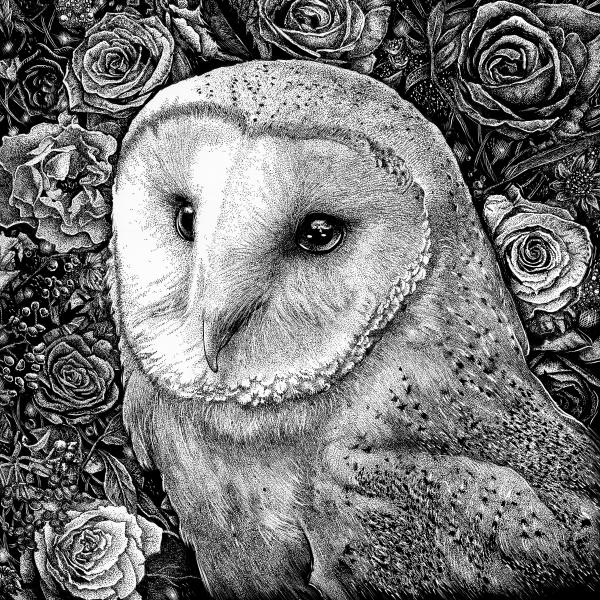 'Barn Owl in Flowers' Ink Drawing picture