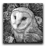'Barn Owl in Flowers' Ink Drawing