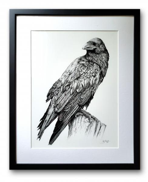 'Raven' Ink Drawing
