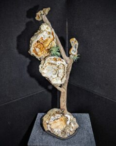 Agatized Coral on Driftwood Sculpture picture