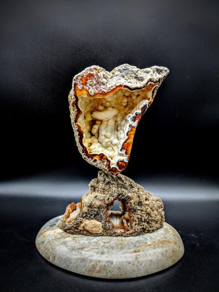 Tampa Bay Agatized Coral Sculpture