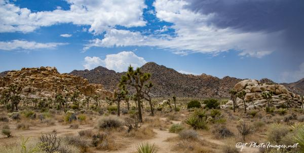 Joshua Tree National Park (Panorama)