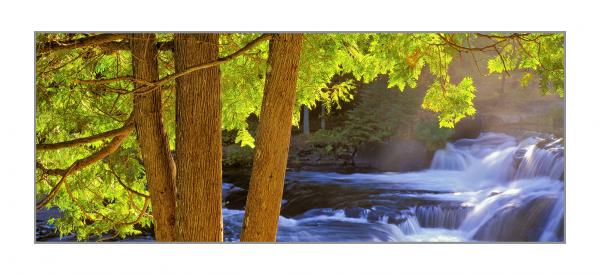 "CEDARS - gallery-wrapped canvas •  8"" x 12"" • $40 / 12"" x 30"" • $120"