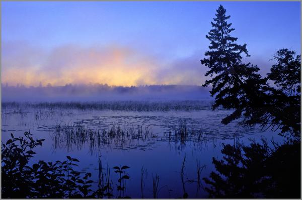 "LAKE ITASCA DAWN - gallery-wrapped canvas •  8"" x 12"" • $40 / 16"" x 24"" • $120"