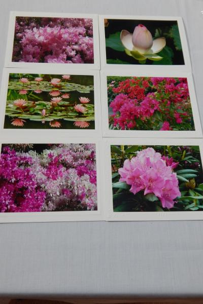 Photo Note Cards - Flowers-Pink or Mixed Color