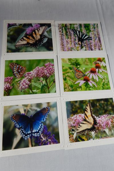 Photo Note Cards - Butterflies picture