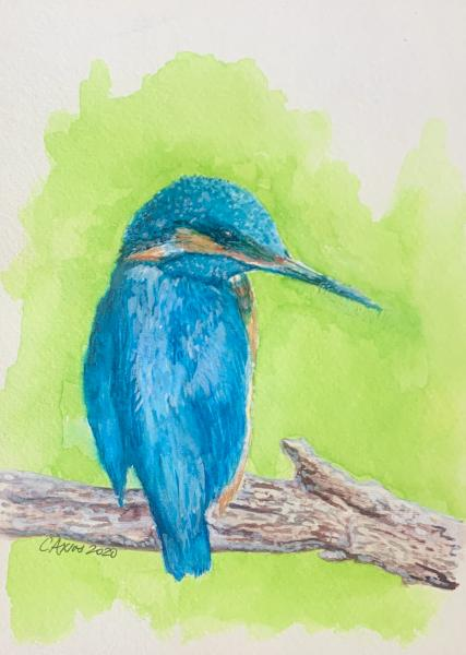 Blue Kingfisher (print)