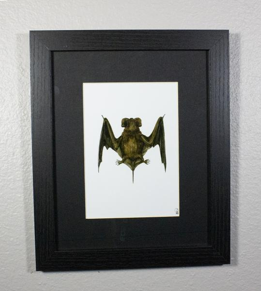 Mexican Free-tailed Bat Print Framed
