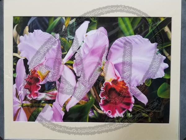 Orchids reproduction on paper