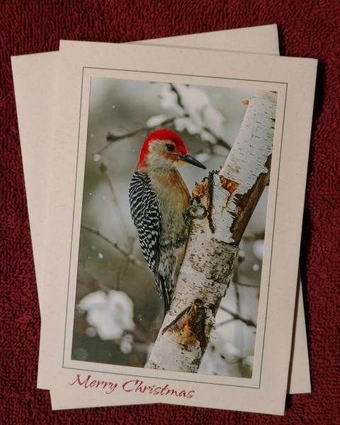 Red-bellied Woodpecker' notecard picture