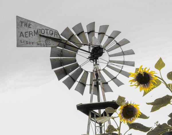 'Sunflowers and Windmill' - matted print
