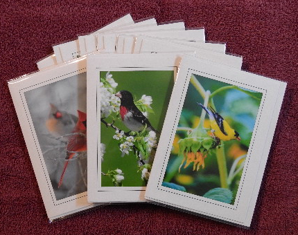 'Songbird' notecards - set of 9 cards
