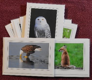 'Nature' notecards - set of 9 cards