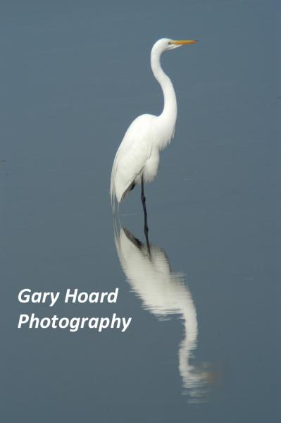 Gary Hoard Photography